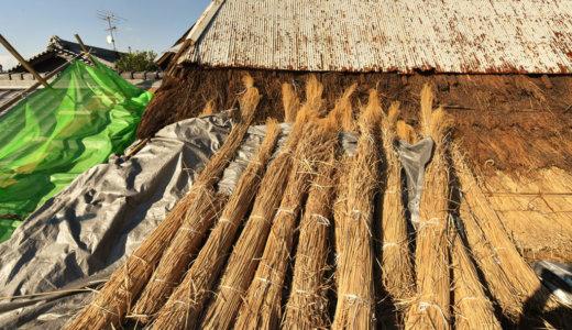 愛知の茅葺き再生9 野屋根